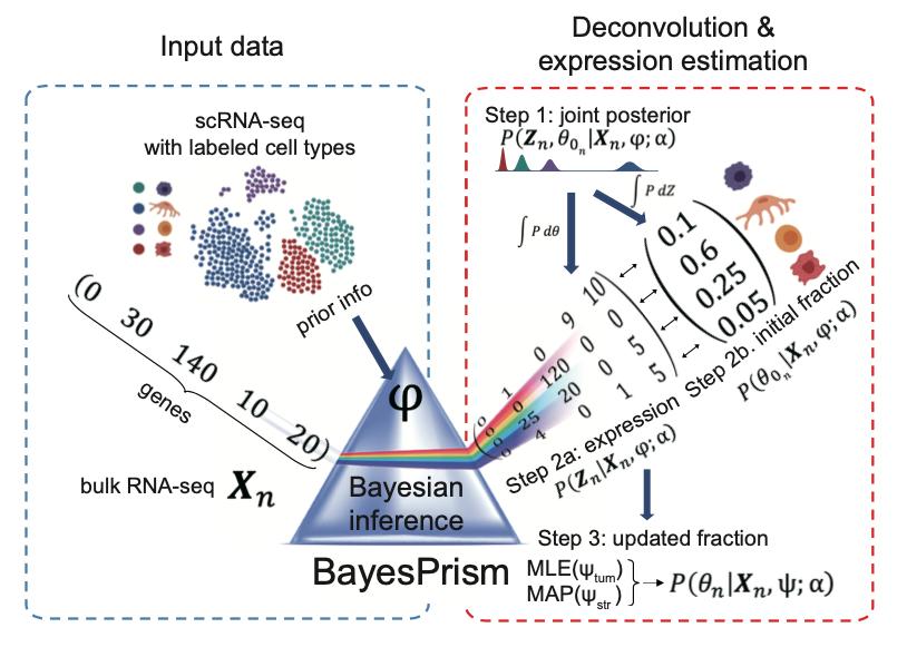 BayesPrism model